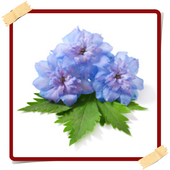 Delphinium Flowers Onet Game 1.0