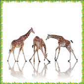 New Giraffe Onet Connect Games 1.0