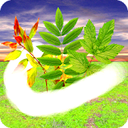 Windy Relaxation Full 1.1.3