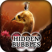 Hidden Bubbles: Spring Babies 1.0.0