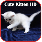 Cute Kitten HD Wallpaper 1.0
