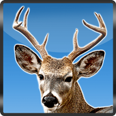 Archery Jungle Deer Hunting 3D 1.2