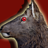 Jungle Deer Hunting 3D-sniper shooting 2018 HD 2.2