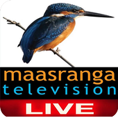 Maasranga Tv Live 5 1 APK Download - Android Sports Games