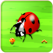 Hunter LadyBird 1.0