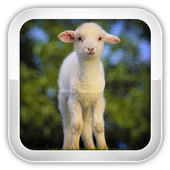 Sheep Games 1.0