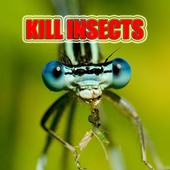 Kill Insects, Clean your home