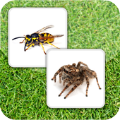 Insect Memory Game 1.01