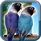 Lovebirds Unified Common 10