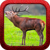 Red Deer Hunter 1.0