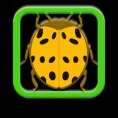 Barrel of Beetles