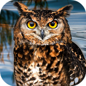 Owl Bird Simulator 1.0