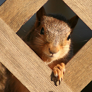Squirrel Puzzle 1.1