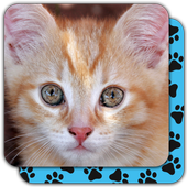 Memory Games free: Cute Cats 1.06.006