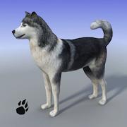 Snow Dog Survival Simulator 1.0