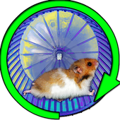 Hamster In a Wheel Desert 1.0