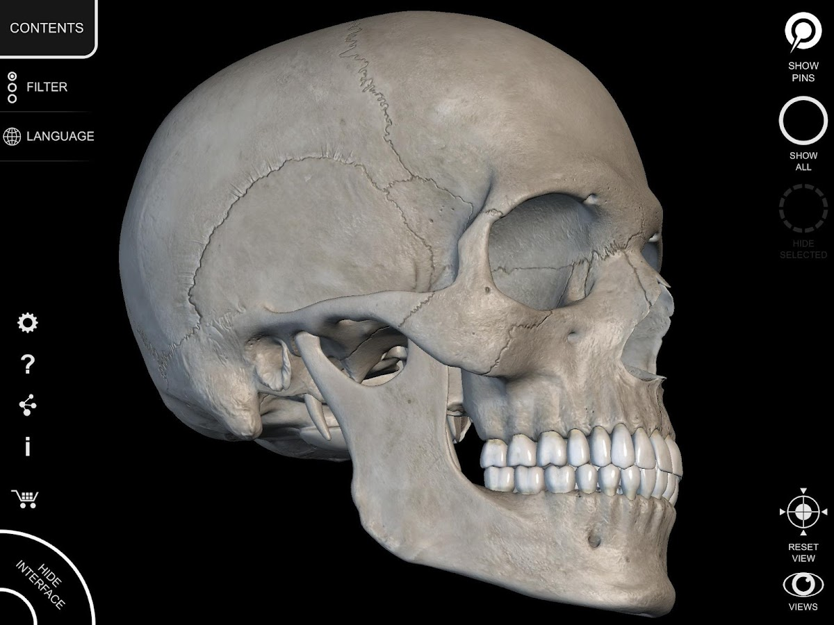 Skeleton | 3D Anatomy 2.3.2 APK + OBB (Data File) Download - Android ...