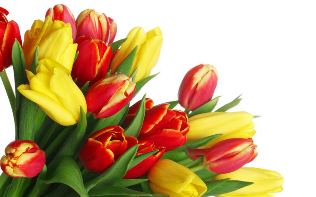 Flowers Live Wallpapers:tulips 4.1.1 APK Download