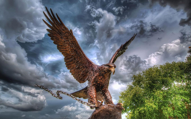 Hd wallpaper eagle - Eagle Hd Wallpaper 1 01 Screenshot 1
