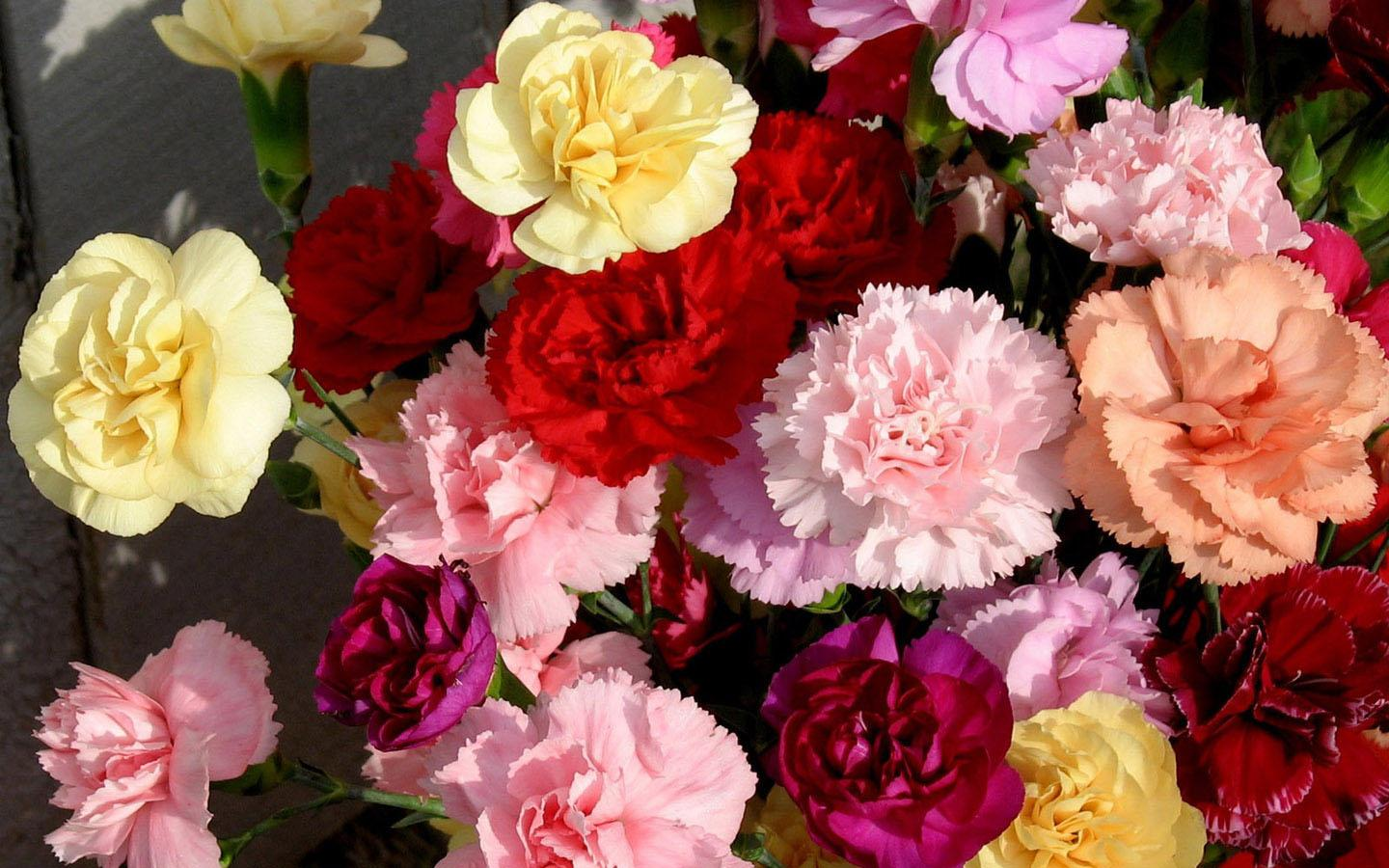 Carnation Wallpapers Hd 1 01 Apk Download Android