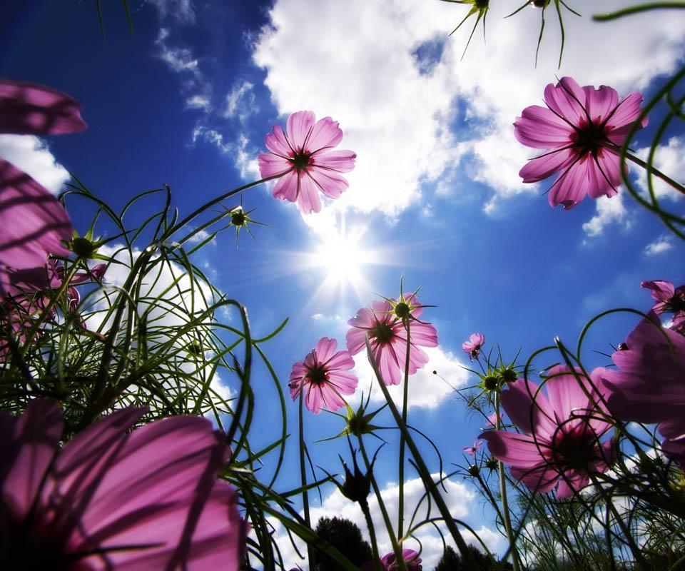 دانلود beautiful flower . apk  برنامه های عکاسی, Beautiful flower