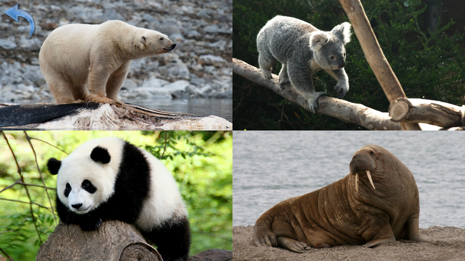 animals for kids planet earth animal sounds photo 6 5 5 apk
