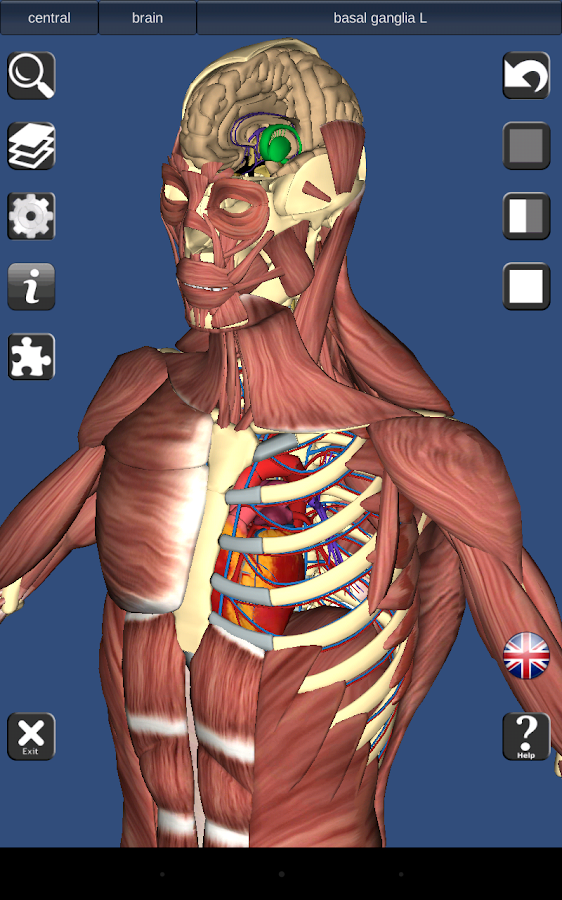 Famous Best Anatomy And Physiology App For Android Gift - Human ...