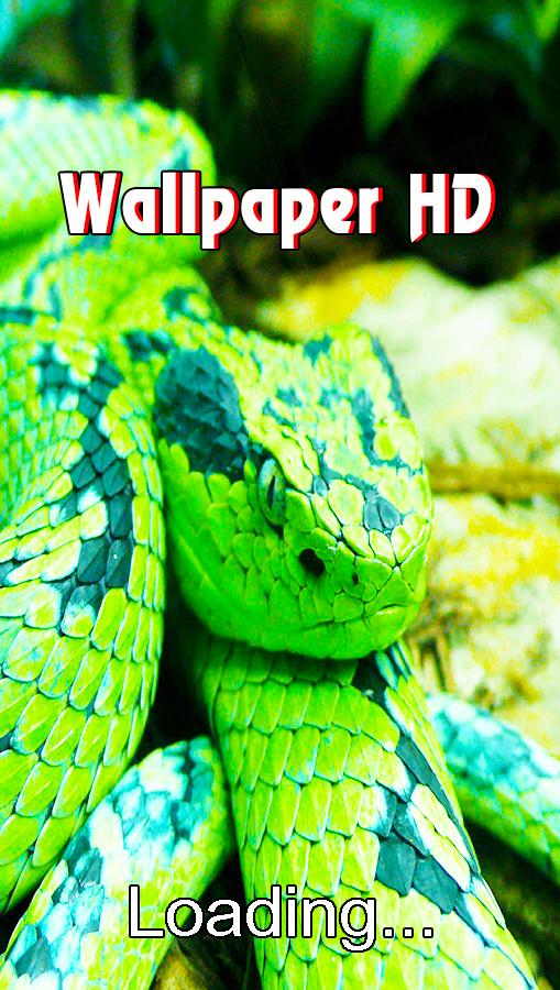 Snake Live Wallpaper 1.0 APK Download