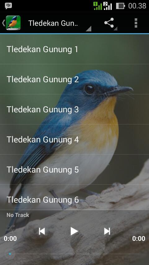 master kicau tledekan sulingan android apps on google play