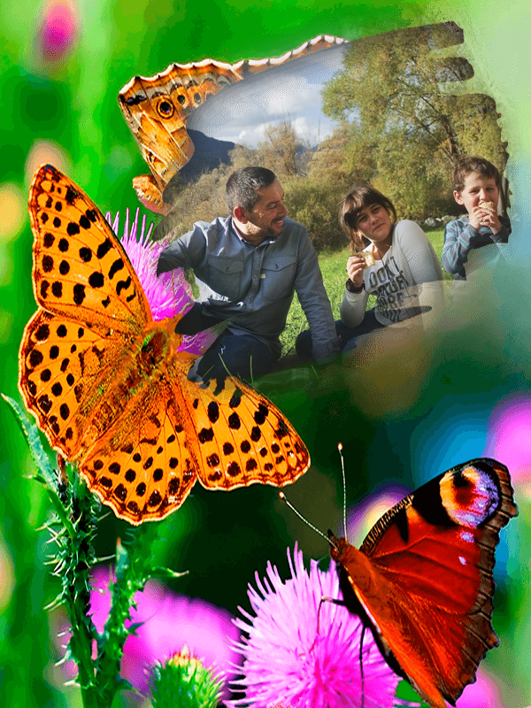Popular Butterfly Picture FramesBuy Cheap Butterfly