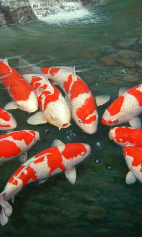 Download Gambar Ikan Bergerak Gambar Lucu Bikin Ngakak