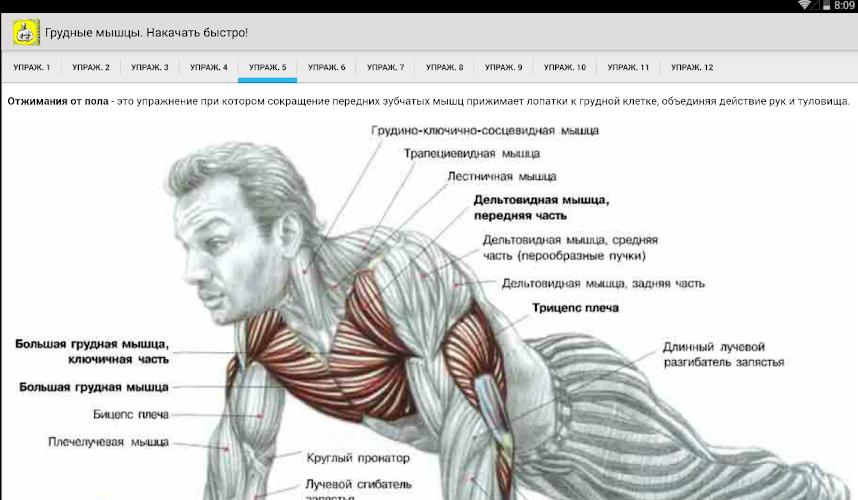 Как накачать грудные мышцы в домашних условиях парням 175