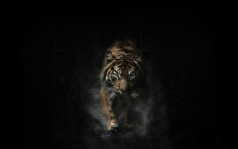 lion live wallpaper apk