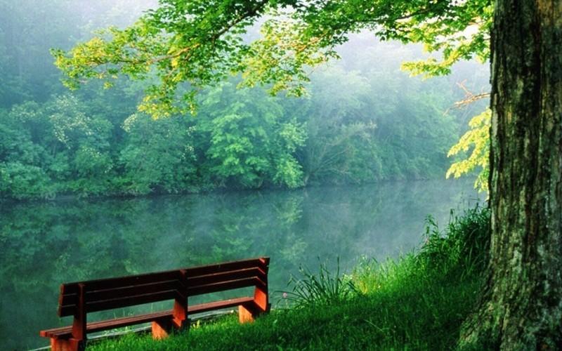 Green Nature HD Wallpaper 10 Screenshot 3