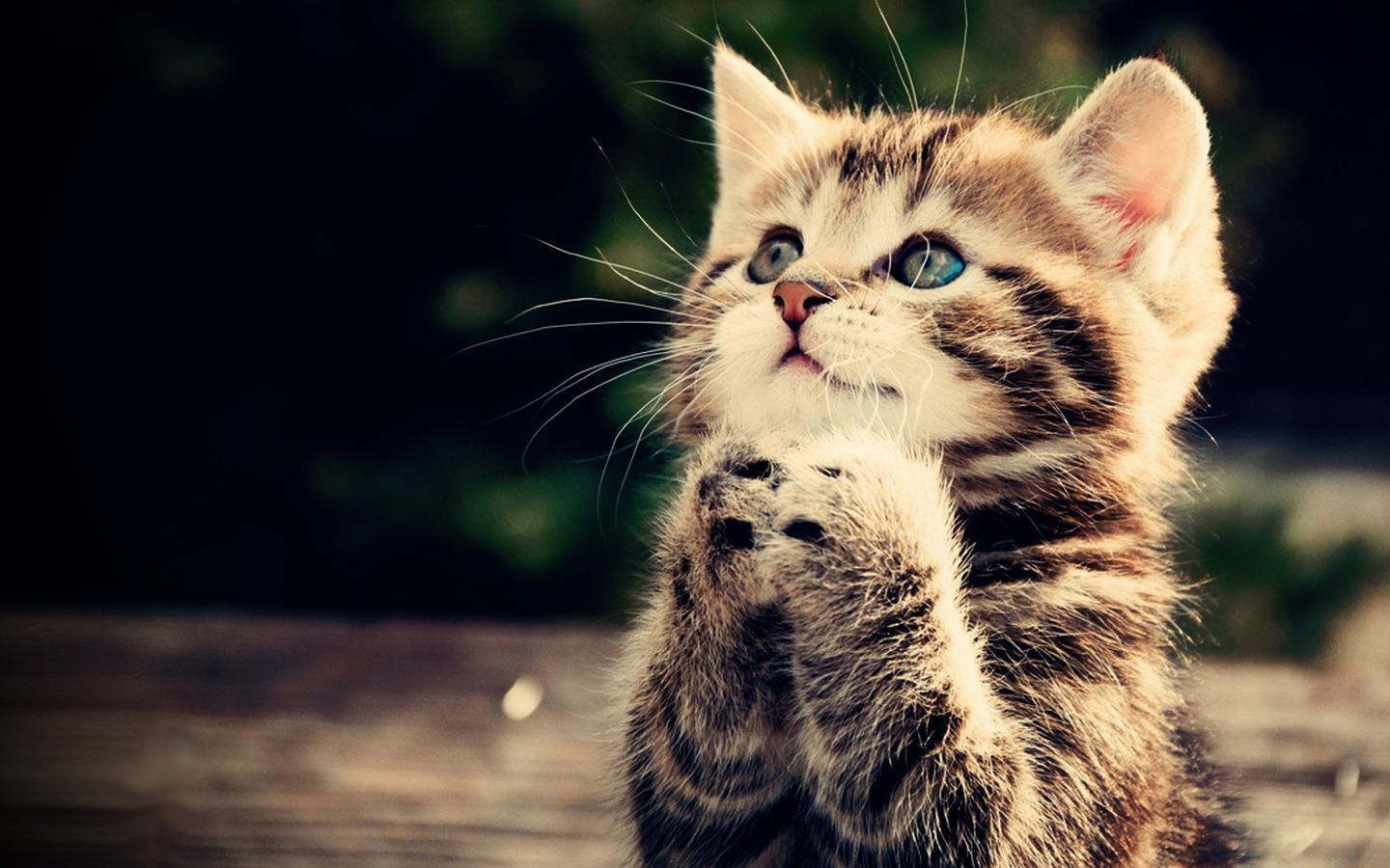 Cute Kitten Wallpaper 1 01 APK Download Android Personalization Apps
