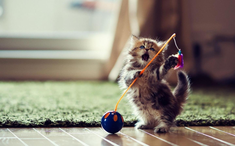 Cute Kitten Wallpaper 1 01 APK Download Android ПерсонаРизация