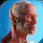 anatomicus apk