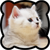 Jigsaw puzzles. Cats 1.0.1