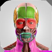 Anatomy Cards AnatomicusAnatomicus Anatomy AppsEducation