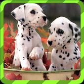 Puppy Games - Spot DifferencesFiziziPuzzle