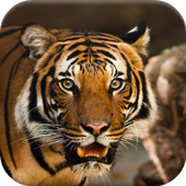 Real Animal Jigsaw Puzzles 1.1
