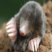 Mole Mash (Mr Stuttard Test)