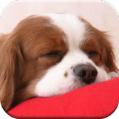 Puppy Dog Games Free 1.1