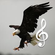 be.birdsounds.com icon