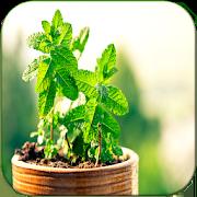 Cura pelas Plantas 1.1
