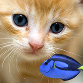 KITTY & FISH LIVE WALLPAPER(7) 1.2.0