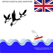 British Coastal Bird ID 1.1