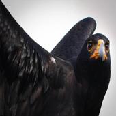 Beauty Eagle 1.0