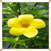 com.Buttercup.Flowers.OnetGame icon