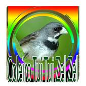 Coleiro Baiano Tui Tui Zel Zel 1.0